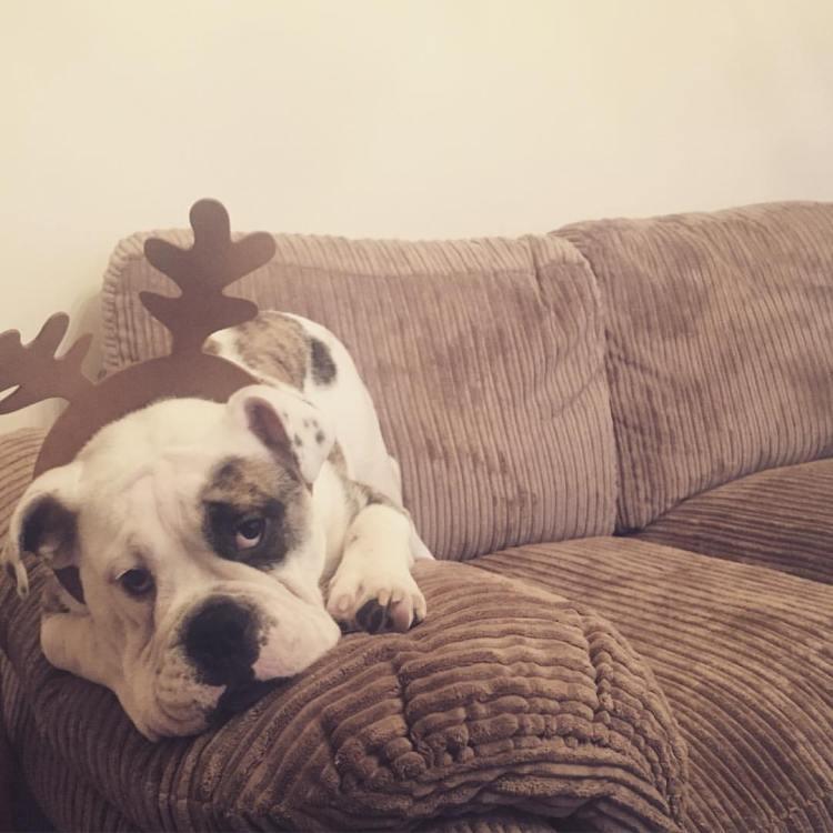 malc-reindeer